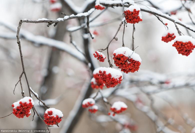 Синоптики рассказали, когда в Томске ляжет снег