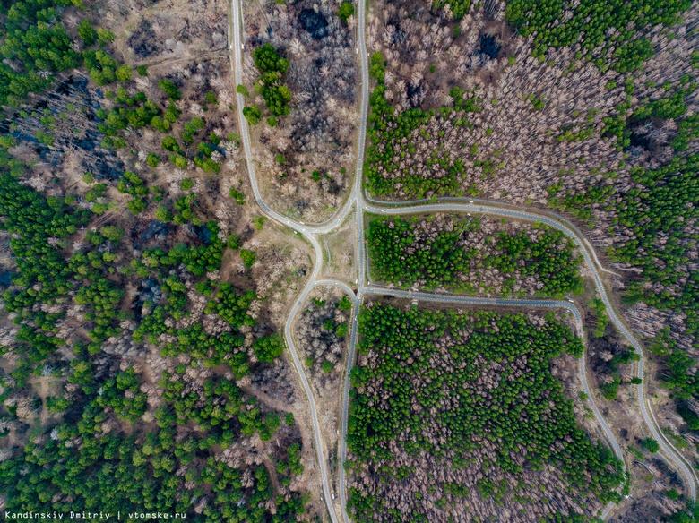 Мэрия: срубленные в Академгородке деревья признаны аварийными