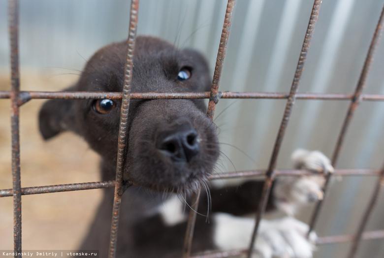 Томичи стали активнее забирать собак из «Верного друга» после гибели щенков из-за морозов