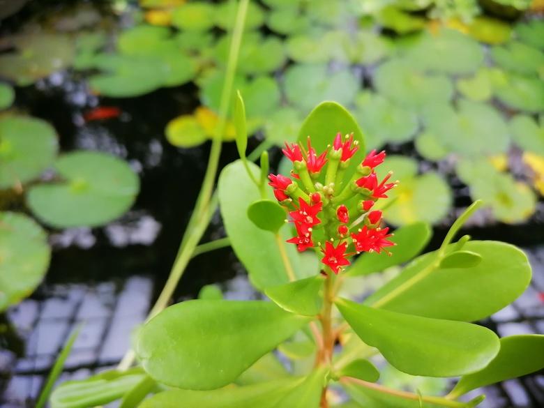 Черное мангровое дерево родом из Таиланда впервые зацвело в ботсаду ТГУ
