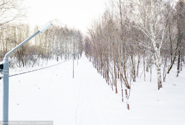 Томские предприниматели хотят благоустроить аллею в Михайловской роще за свой счет