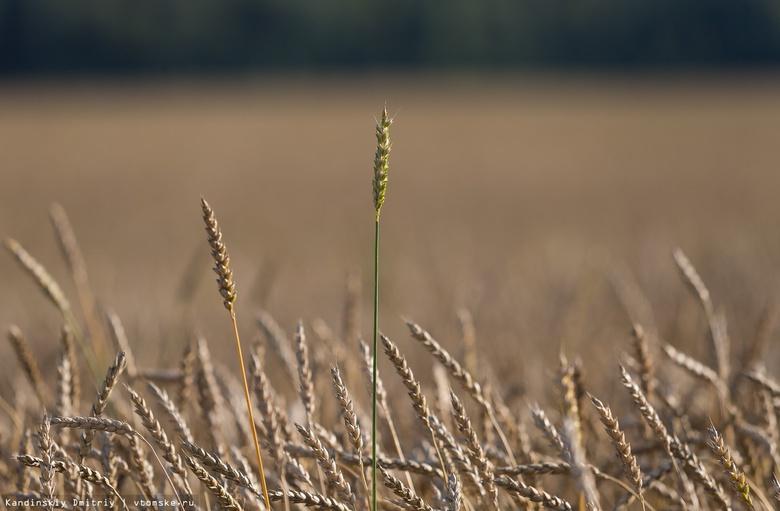 Аграрии одного из районов Томской области не смогли закончить посевную из-за дождей