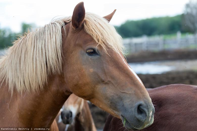 Зараженную опасной болезнью лошадь нашли в Томской области. Введен карантин