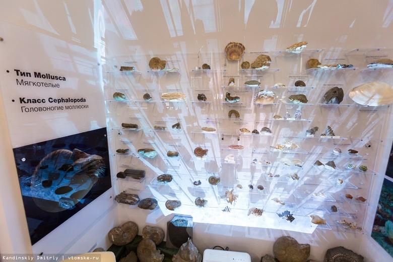 «Привал геолога», секреты минералов и скелет бизона ждут томичей в «Ночь музеев» в ТПУ