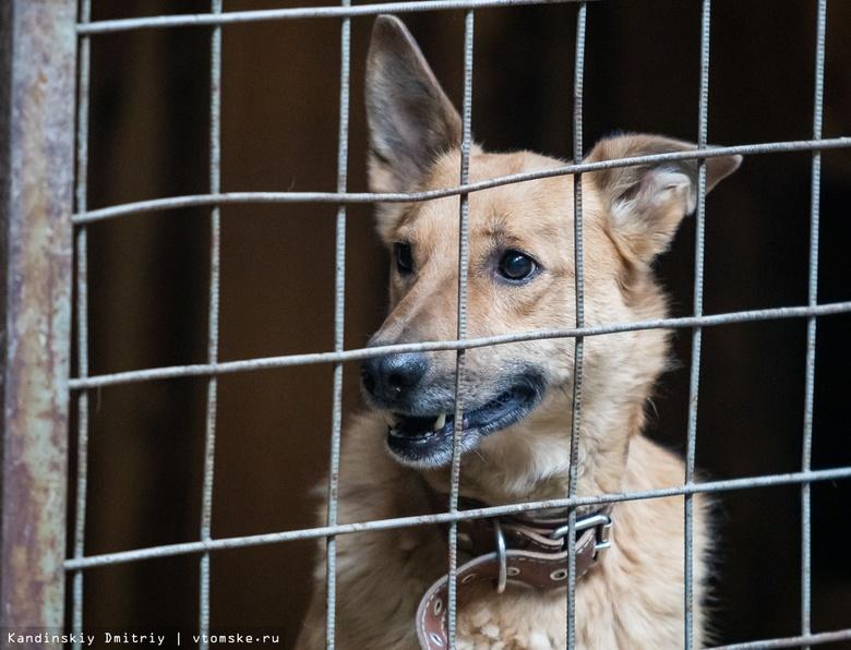 Томичи могут помочь зоозащитникам обустроить новый дом для бездомных животных