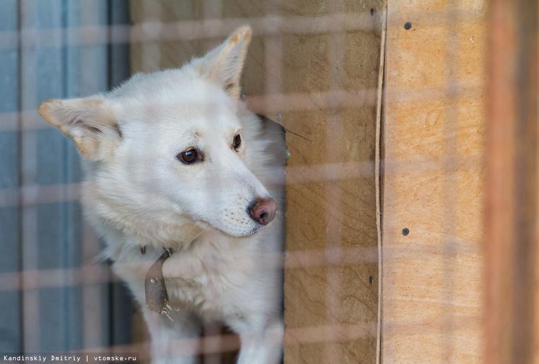 Количество заявок на отлов бездомных собак в Томске снизилось почти в 10 раз
