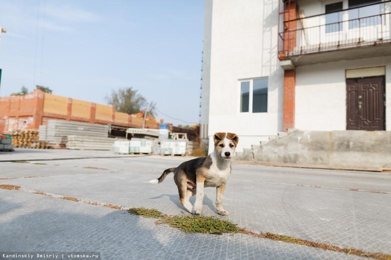 Власти: вопрос со строительством приюта для бездомных собак остается открытым