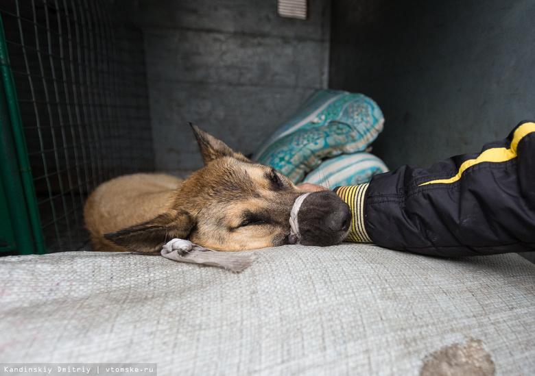 Власти Томска смогут использовать бюджет региона для пункта передержки собак