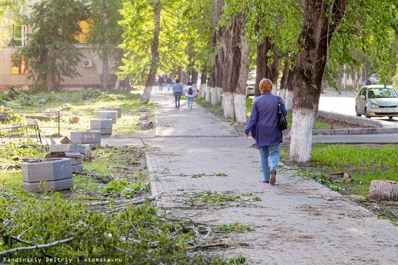 Яблони, рябины и клен вместо тополей: на Усова началось благоустройство пешеходной зоны
