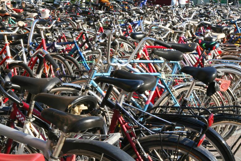 Детские и горные: купить велосипеды известных брендов через интернет