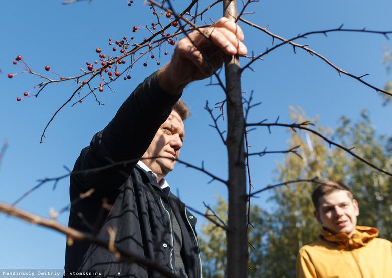 Мэр Томска на субботнике посадил деревья и обсудил будущее Лагерного сада