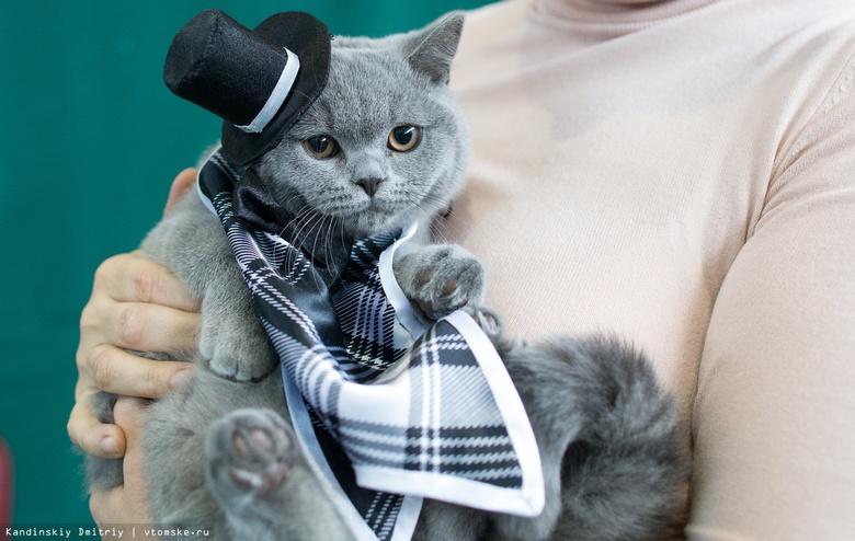 Законопроект об обязательной регистрации собак и кошек внесен в Госдуму