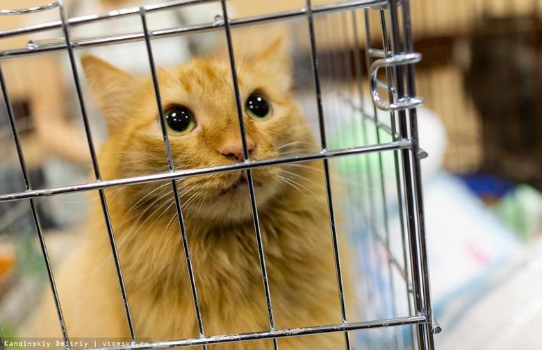Рыжий, Буся и Пресли: 40 котов ждут томичей в воскресенье на ярмарке-раздаче