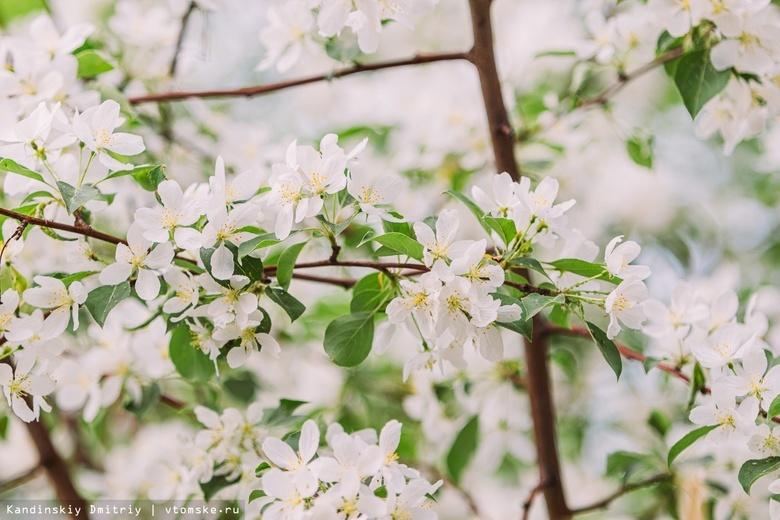 Врач рассказал, как аллергики могут защитить себя в период цветения растений