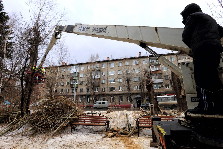 Около 350 аварийных тополей и кленов снесут на проспекте Кирова в Томске