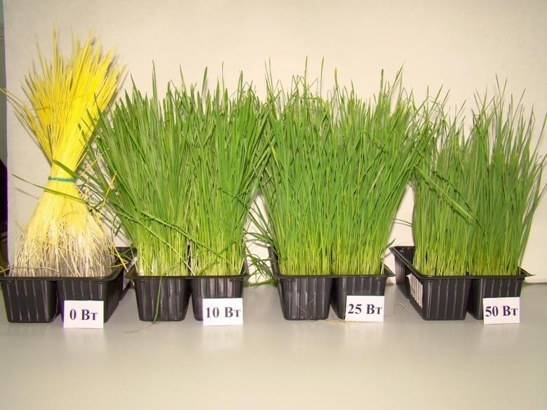 Томичи создали условия для выращивания растений в Арктике и космосе