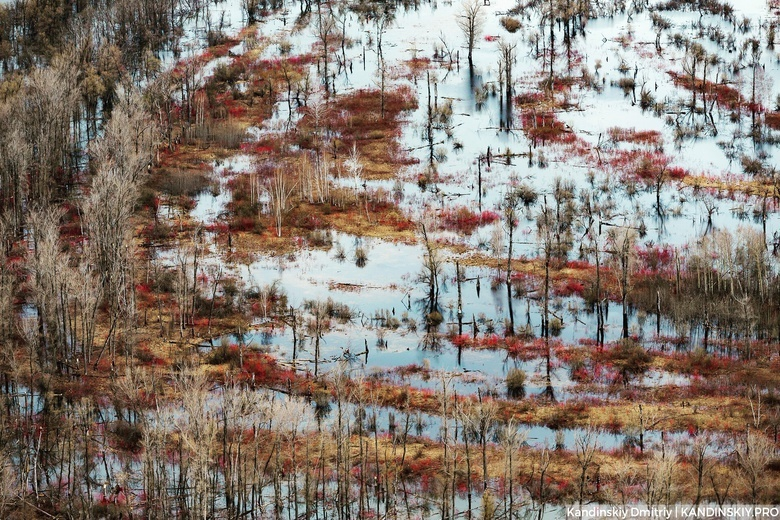 Томские и британские ученые исследуют углеродный цикл Васюганских болот